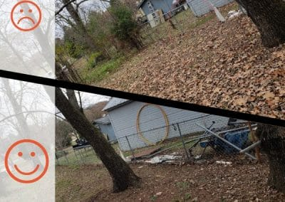 Before and After Leaf Removal