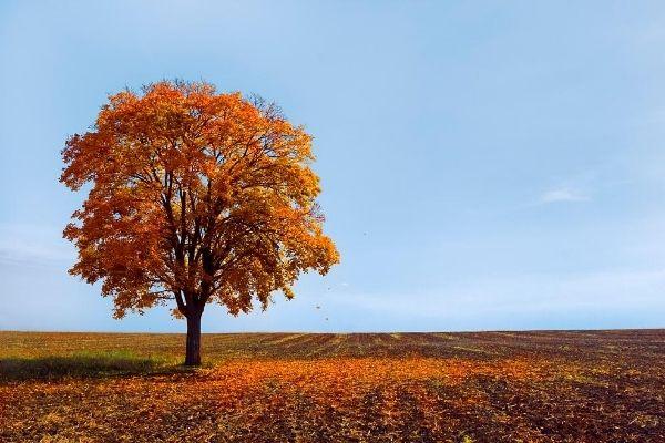 Fall Lawn Calendar