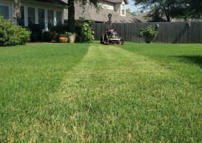 Grass Cutting Near Me