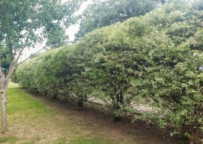 Hedge Trimming Near Me