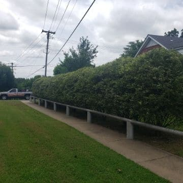 A freshly edged sidewalk surrounded by recently mowed grass and pruned shrubs.