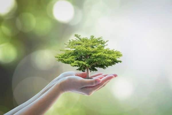 Plants produce oxygen
