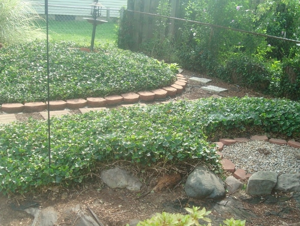 river valley ar lawn services
