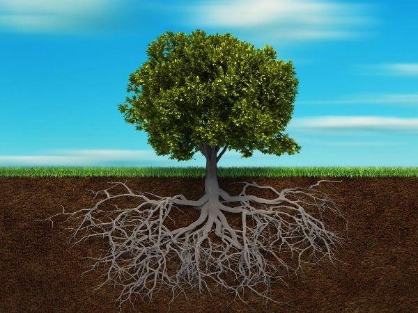Roots natural erosion control