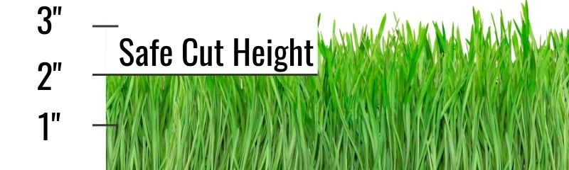 Safe Grass Cut Height One-Third Rule