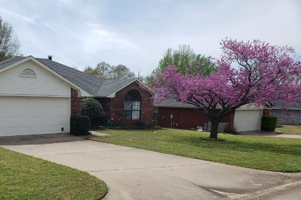 A client's home following a Spring clean up service. The lawn is free of all debris and there is a tree blooming with pink flowers.