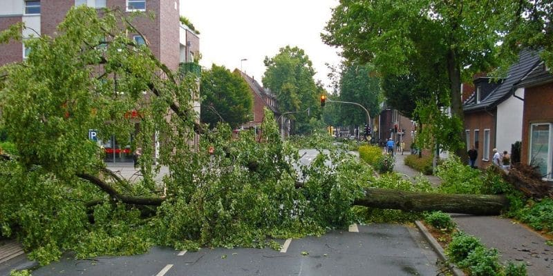 downed tree blocking street after storm